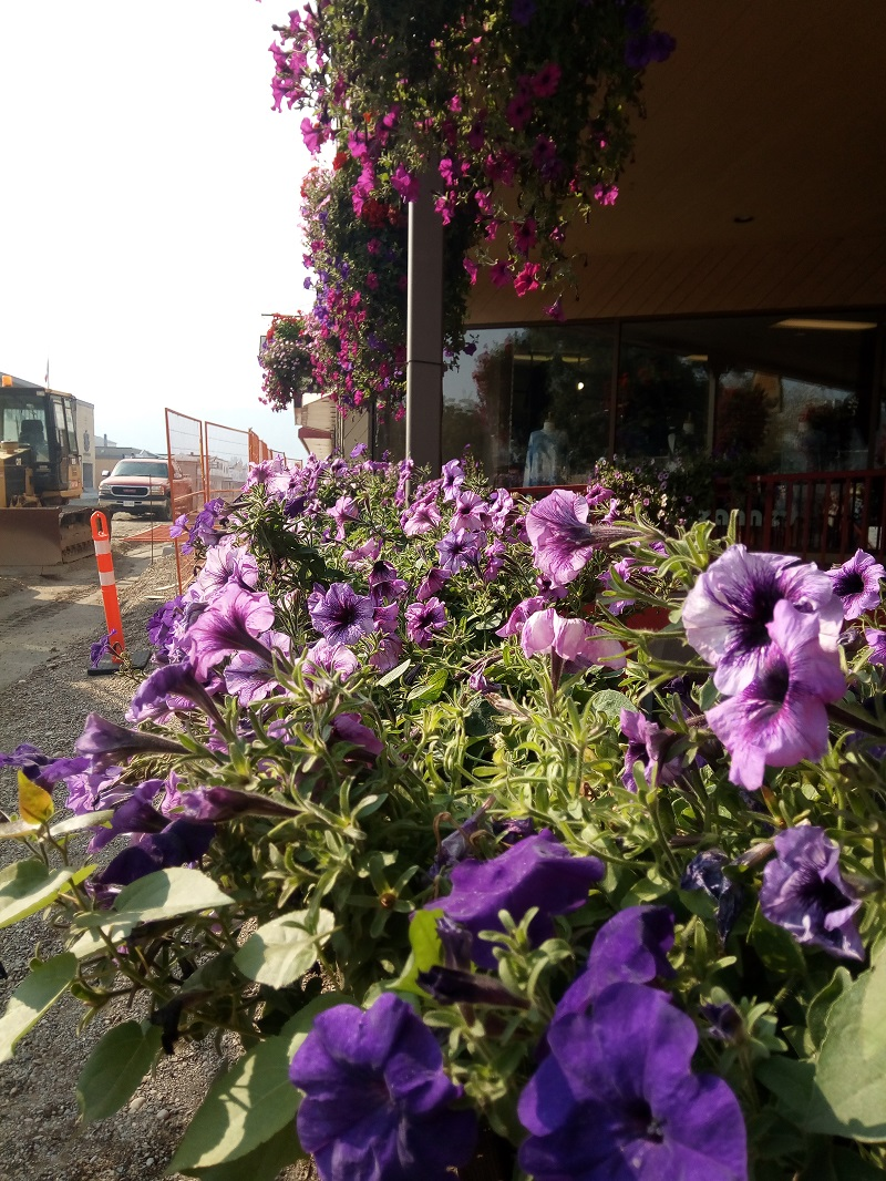 Hanging Baskets outside Granville's Coffee
